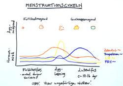menstruationscykeln hormoner blodprov